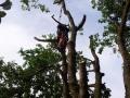 Bayreuther Baumpflege - Baumfällung_03
