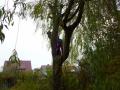 Bayreuther Baumpflege - Baumfällung_07