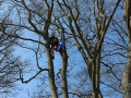 Bayreuther Baumpflege - Kronensicherung