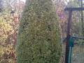 Bayreuther Baumpflege - Heckenschnitt