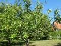 Obstbaumschnitt_04