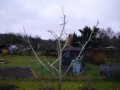 Obstbaumschnitt_02